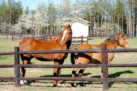 Stables at Grande Pines